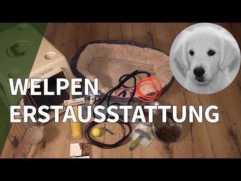 Welpen Erstausstattung ► Empfehlung Für Welpen Zubehör Und Hunde Erstausstattung