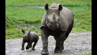 Животный мир, Нападение животных и защита потомства убийцы Африки