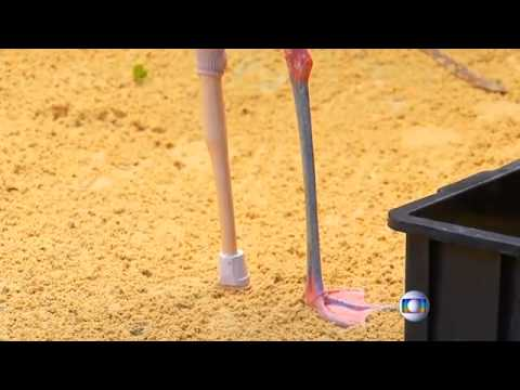 Brazil: Flamingo in Sao Paulo zoo given prosthetic leg