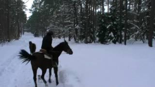 Rebeliant -konie w terenie