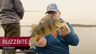 BuzzBite Crankbait - Westin-Fishing