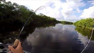 Tampa Bay Kayak Fishing Pro Angler 12
