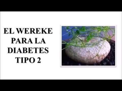 WEREKE PARA DIABETES - Plantas medicinales para la