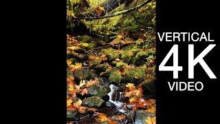 VERTICAL ULTRA HD 4K SCENE: Rejuvenating Forest Spring - Oregon UHD Nature Relaxation