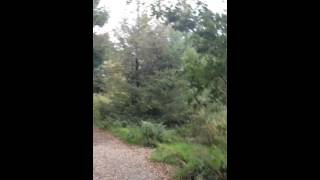 Exploring Beacon Fell Country Park - Lancashire.