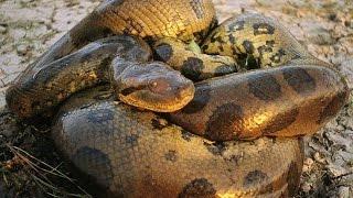72 самых опасных животных Австралии часть3