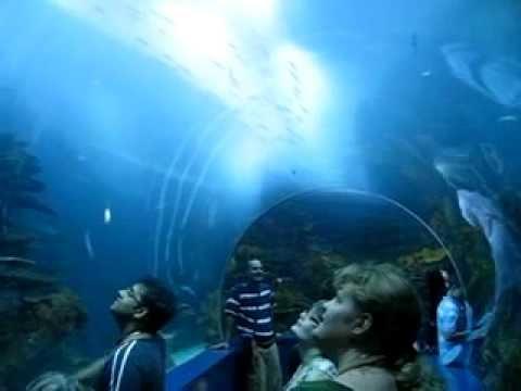 Sharjah aquarium youtube for H m fish count