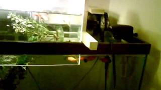 Fish Feeding Frenzy!!!! Upside Down Fish Tank Diy With Plans