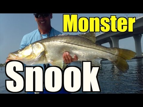Best Monster Snook Video -  Stuart Florida