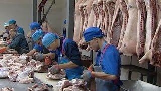 В Курской области реализуется крупный животноводческий инвестпроект