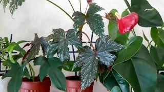 Комнатные растения . Обзор моих комнатных цветов в январе 2019 года.