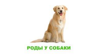 Роды у собаки. Ветеринарная клиника Био-Вет.