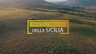 Carni di Sicilia - La carne buona allevata in Sicilia