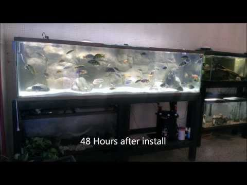 African Cichlid Mix From Caribsea, 240 Gallon Aquarium Overhaul Pres. By KGTropicals