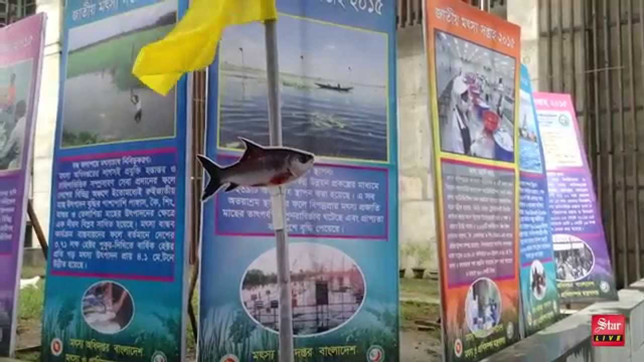 Fish farming in Bangladesh: 50% profit in 5 months
