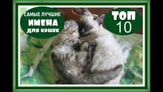 САМЫЕ ЛУЧШИЕ ИМЕНА ДЛЯ КОШЕК Клички имена для кошек КАК НАЗВАТЬ КОТЕНКА КОШКУ ДЕВОЧКУ