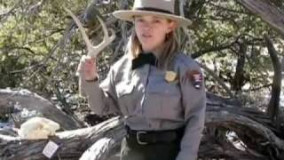 Mountain Lions at Grand Canyon National Park: (Ranger Minute)