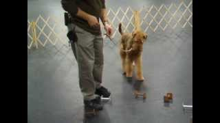 Airedale Obedience Training