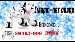 Smart Dog Робопес (робот пес) классная собака робот обзор с Banggood  Smart-dog rewiew
