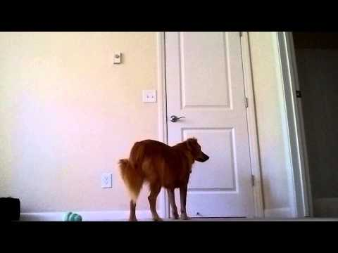 Houdini Dog Trial and Error