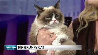 World famous Grumpy Cat dies at age 7