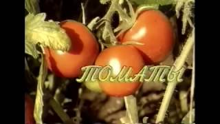 видео Огород на северо-западе