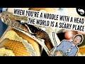 Why Don't I Get Bitten? 24 Tips For Reading Snakes & Avoiding Snake Bites