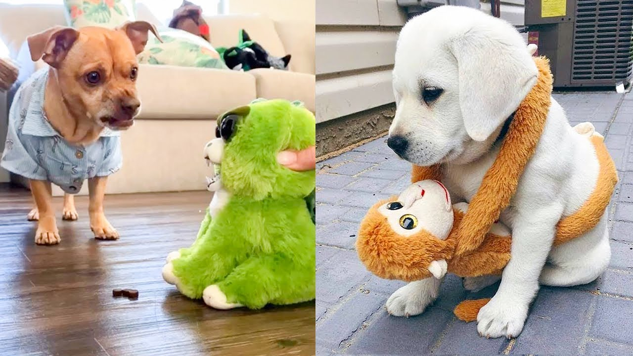 Funny and Cute Dog Reaction to Playing Toy