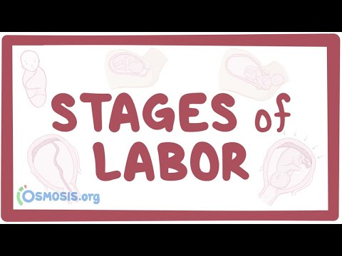 Stages of labor physiology