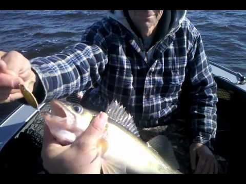 Fall minnesota walleye fishing lake of the woods and for Rainy river fishing reports