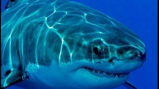 Огромный аквариум в Дубае с акулами и скатами(Один из самых больших аквариумов в мире в Дубае., 2016-03-22T09:31:36.000Z)