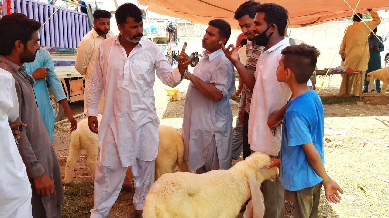 SOODA MEN DHOOKA ? Bakra Eid 2020 Guzar Gai | Kajlay Sastay ? Bakra Mandi Pakistan