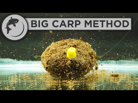 How To Fish The Method Feeder For BIG CARP