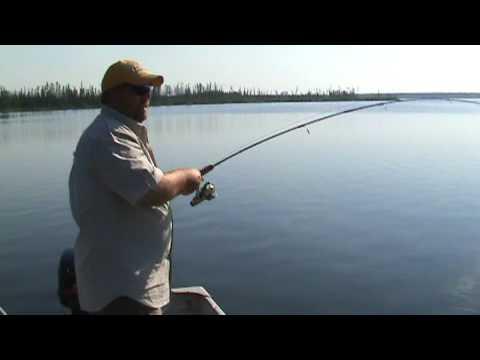 Lynn Lake MB Walleye
