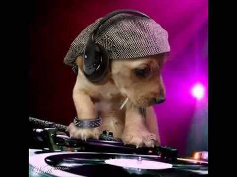 Greem CooL - Salserina Super Dog