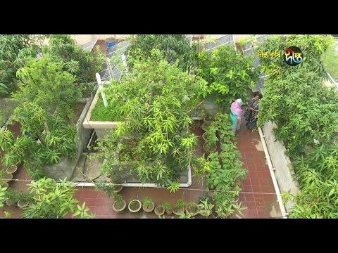 Deepto Krishi/দীপ্ত কৃষি - ছাদকৃষি/কুমিল্লা, পর্ব ২০৪