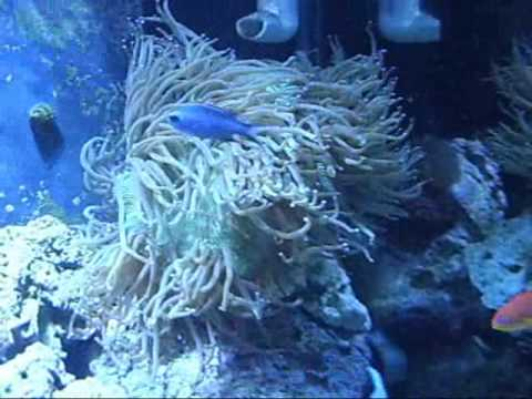Elegance Coral Flow Youtube
