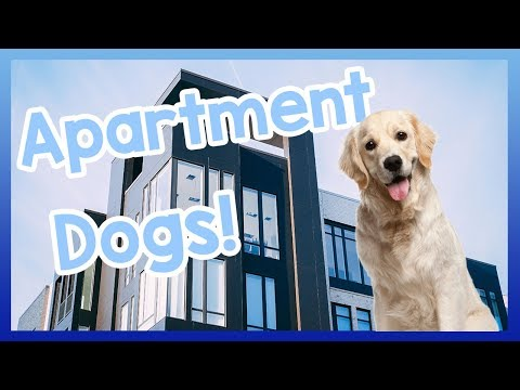 The BEST Apartment Dogs! Dogs Best Suited to Apartment Living!