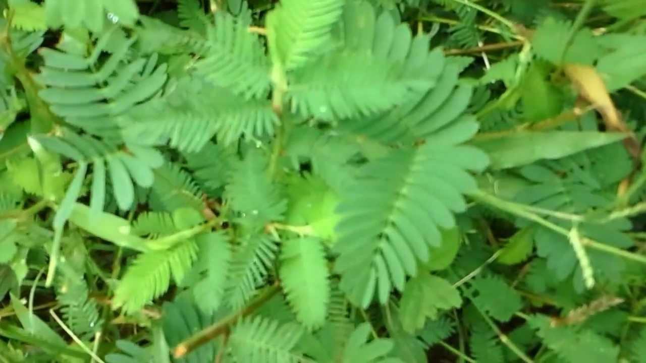 Resultado de imagen para plantas y el sistema nervioso