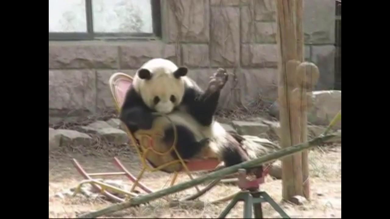 Random Dubs   Panda In A Rocking Chair