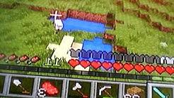 Jääräpäinen lammas
