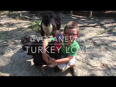 Turkey Love & Turkey Hugs ??