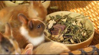 Натуральное питание кроликов - композиция