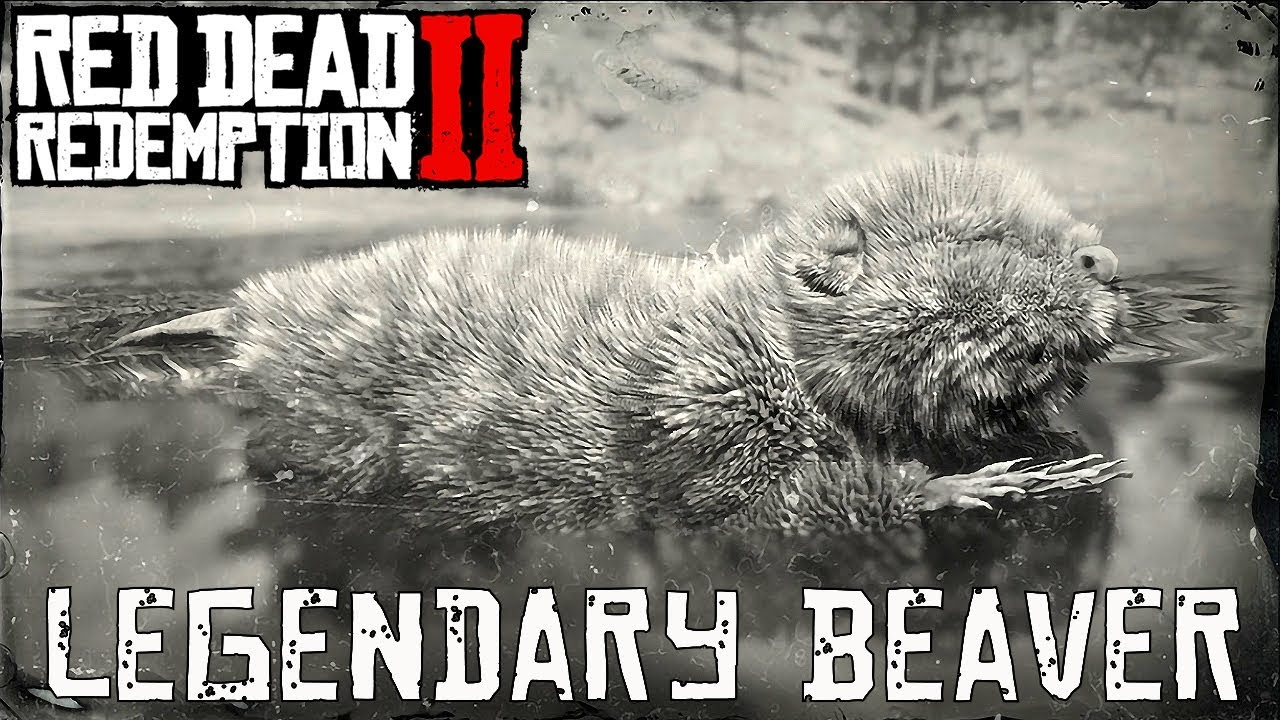 Red Dead Redemption 2 Legendary Animals Beaver