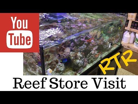 saltwater reef store visit: aqua visions in Algonquin IL