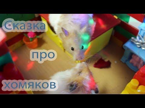 видео: Сказка про сирийских хомяков