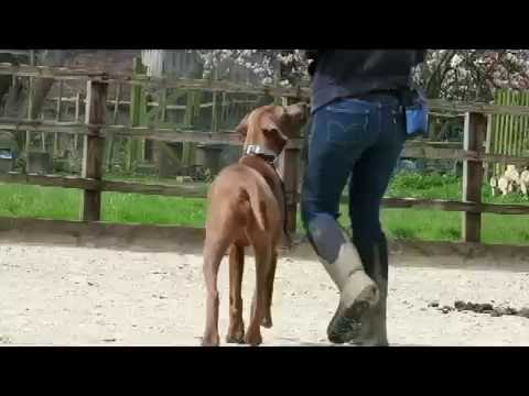 India - Rhodesian Ridgeback - 2 Week Residential Dog Training at Adolescent Dogs