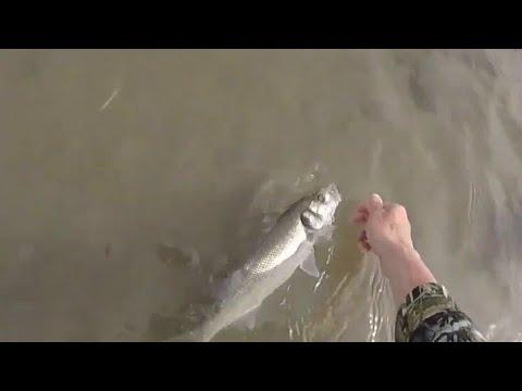 Bass Fishing Menai Straits Anglesey