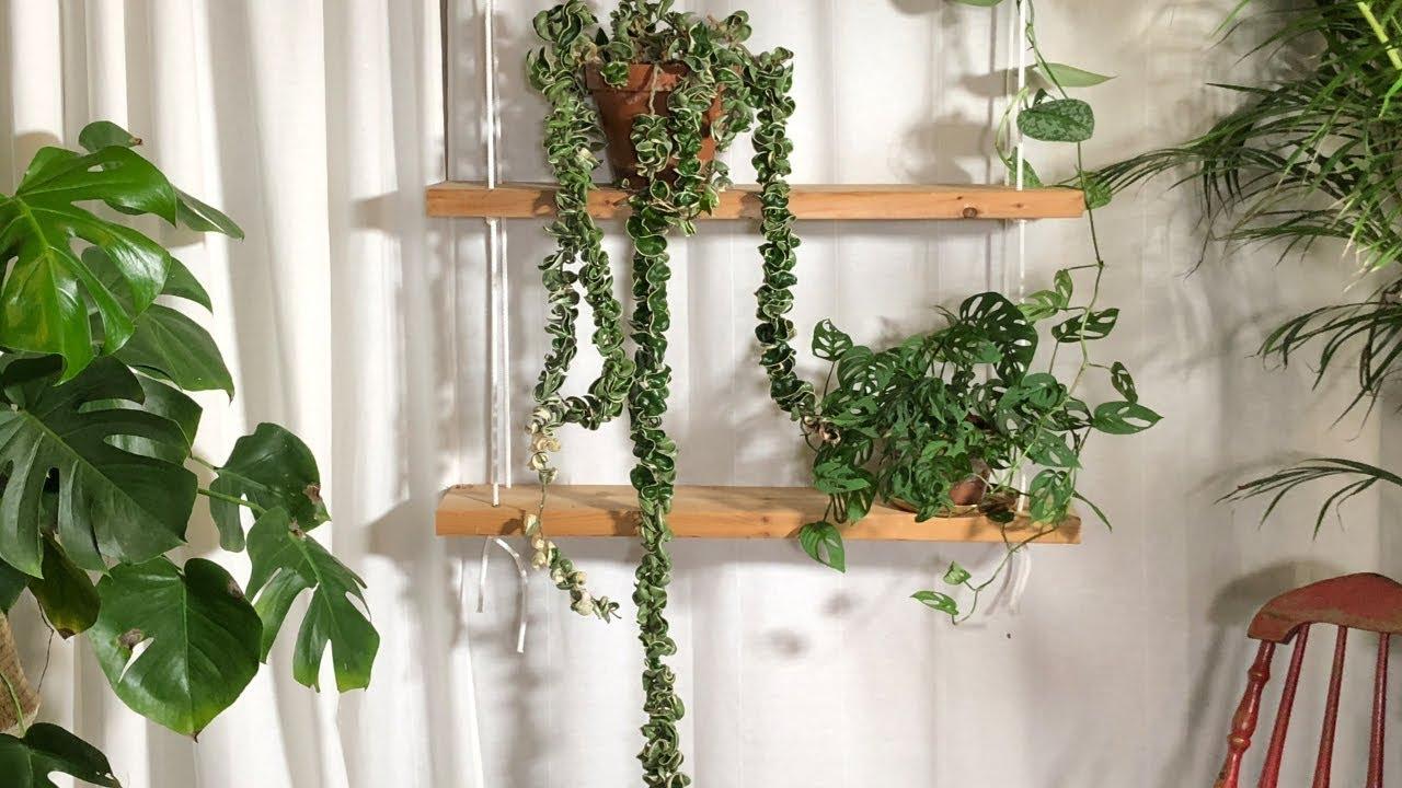 Hoya Hindu Rope Plant Care Houseplant Care Tips Youtube