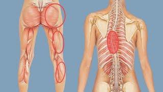 Мышечный баланс таза и нижних конечностей – важное условие при лечении сколиоза